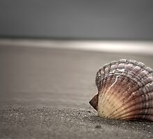 Seashell  by shuttersuze75