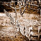Fence Line by Bevlea Ross