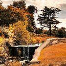 Bradgate Park Indian Summer by Aggpup