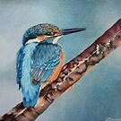 Kingfisher by lanadi