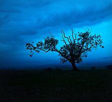Silhouette by chriscyner