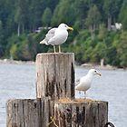 Birds of the Sea by JennaKnight