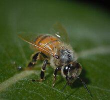 Bee by acopeland