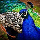 Bird Of India by Stephen Ruane