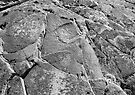 rock face (Tasmania) by Janine Paris