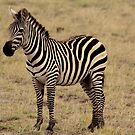 Africa Continues - Stripey Perfection by Sally Haldane