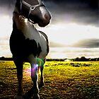 Overpowering horse by Jadetang