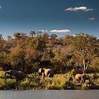 Elephant Evening by Neil Messenger