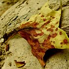 Leaf Closeup - Virginia, USA by VioletHalo