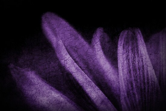 Abstract Petals in Purple Grunge by Christine Annas
