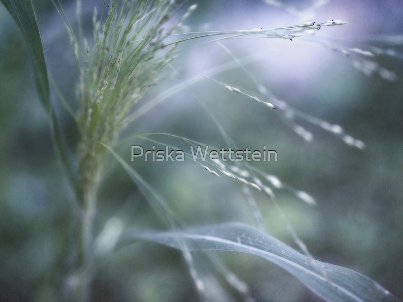 searching the light by Priska Wettstein
