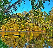 HDR - River and Trees by Doug Greenwald