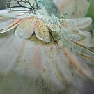 """""""The Delicate Curtsy ....."""" by Rosehaven"""