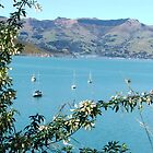 Akaroa, New Zealand by beachbumma