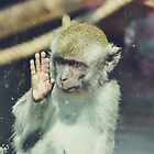 Monkey at the Curragh's Wildlife Park by Sammie Caine