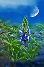 """""""Wild Lupin"""" by Heather Thorning"""