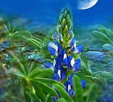 """Wild Lupin"" by Heather Thorning"