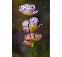 Poppies on Parade Photographic Print