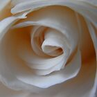 Close to the White Rose by lissygrace