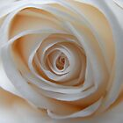 Close to the White Rose 3 by lissygrace