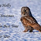 Christmas Card - Great Gray Owl by Michael Cummings