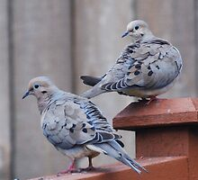 Doves on the fence by Marjorie Wallace