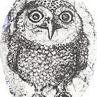 Elise the Owl by Adair Imrie