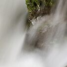 Moss, rock and running water by Patrick Morand