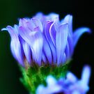 Blue wild flower by Jeffrey  Sinnock