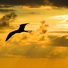 Bird sailing in yellow sky - Ave cruzando el cielo amarillo by Bernhard Matejka