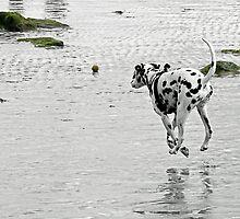 Dangling Dalmatian ;) by Susie Peek