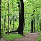 Forest Path by Michael L. Colwell