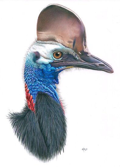 Beware the Cassowary by Karen  Hull