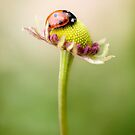 Little lady by Mandy Disher