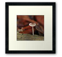 Miniscule Mushroom Framed Print