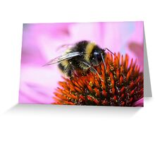 Bumblebee on a flower Greeting Card