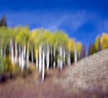 Shapes & Colors of Fall by A.M. Ruttle