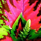 Coleus Plant by Shulie1