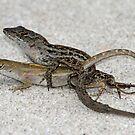 Lizards in love ! by jozi1