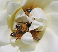 Busy Bees by Joel Fourcard