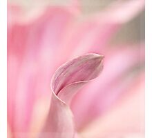 Sway with me Photographic Print