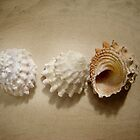three shells by ecrimaga