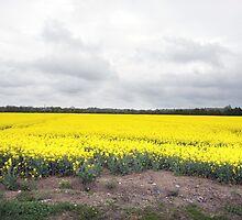 Corn Field, Meath, Ireland by JoeTravers