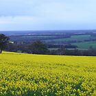 Canola fields, Mount Barker, Western Australia by DashTravels