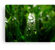 Dew Drop Jewels of Spring Canvas Print