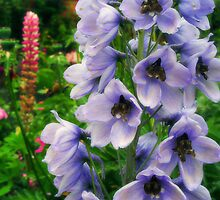 Blue Delphinium by Rewards4life