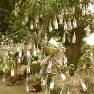 Bottle Tree - St. Kitts, Eastern Caribbean by Jenny Hambleton