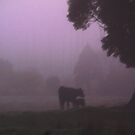 Foggy Morning On The Farm by Asoka