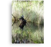 Noosa River Everglades - Reflections 6 Canvas Print