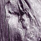 Naked Oak by Stephen J  Dowdell
